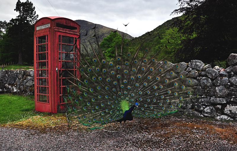 paw w Szkocji
