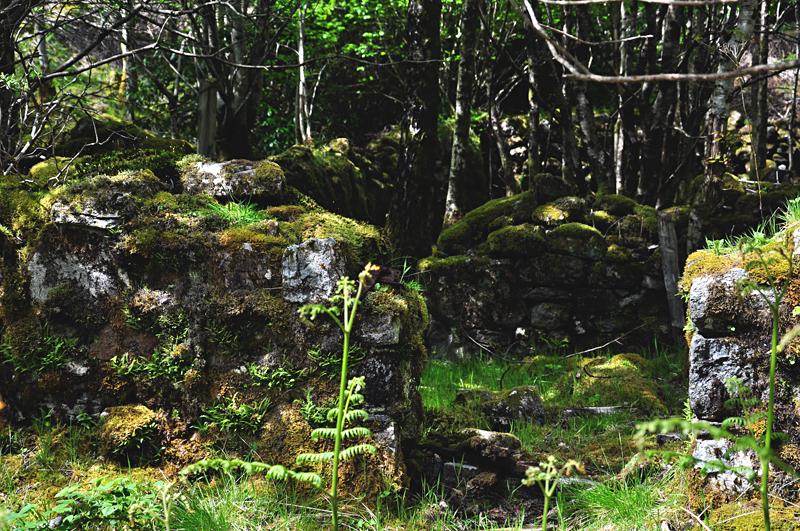 ruiny szkocja