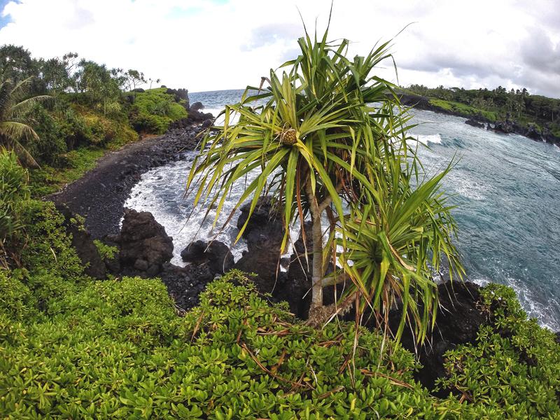 bujna roślinność Maui Hawaje
