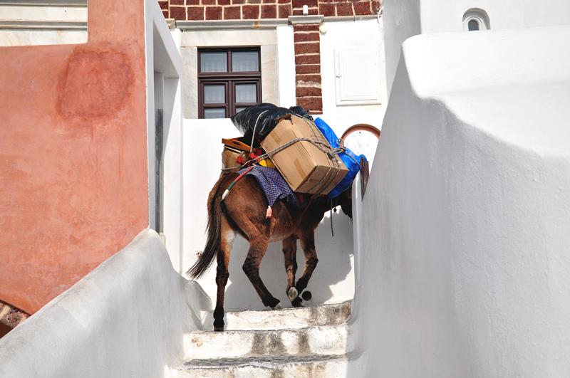 osiołek w Grecji