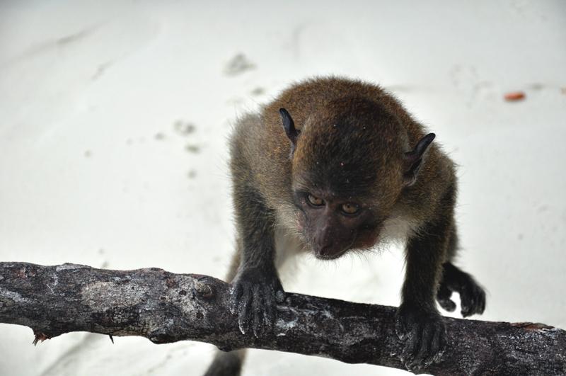 Tajlandia Monkey Beach
