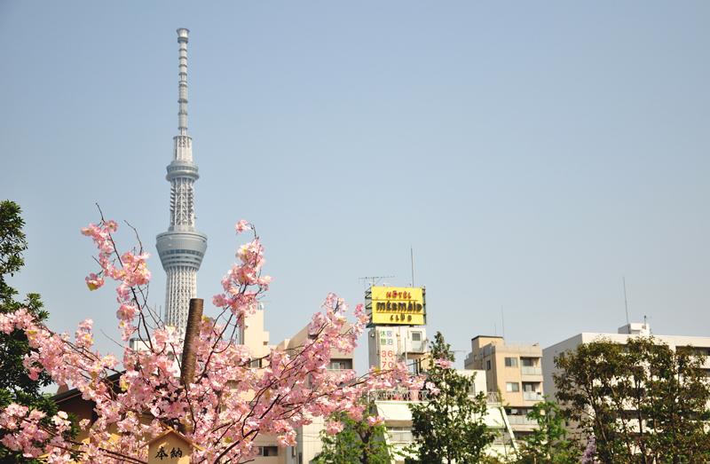 kwitnące wiśnie Tokio
