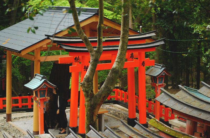 bramy torii Kioto
