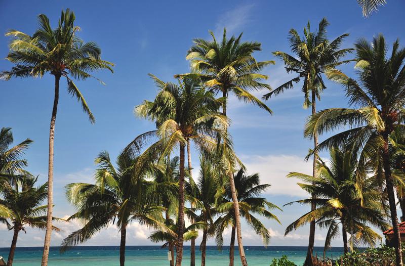 palmy boracay