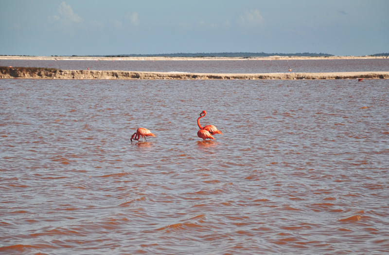 Meksyk różowa laguna
