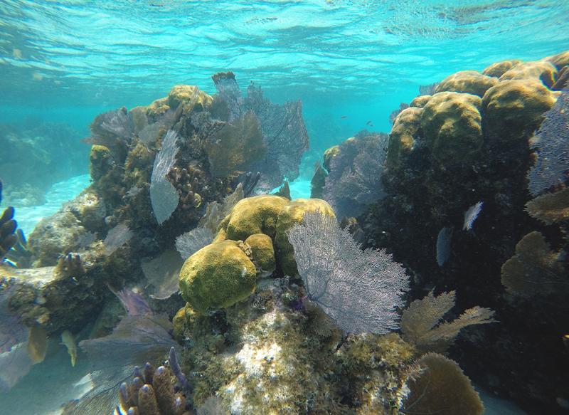 belize rafa koralowa