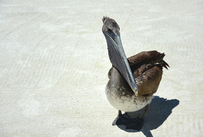 zwierzęta w Belize