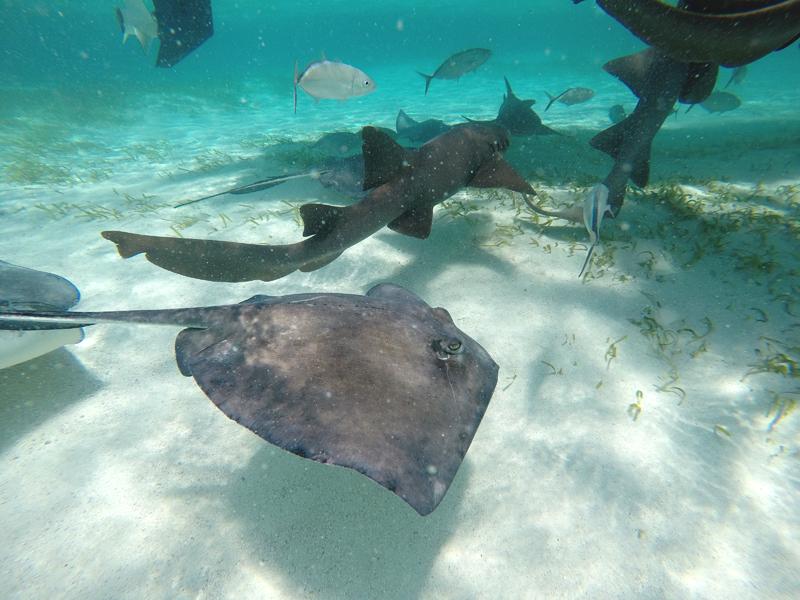karaiby nurkowanie