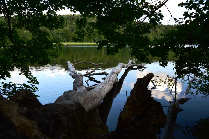 Jezioro Hańcza Suwalski Park Krajobrazowy