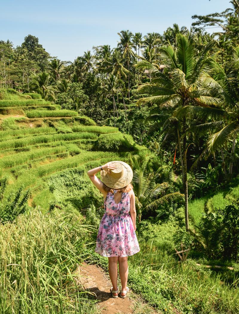 Tarasy ryżowe Bali