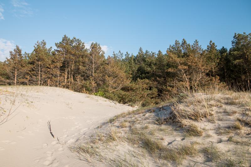 Wydmy na plaży