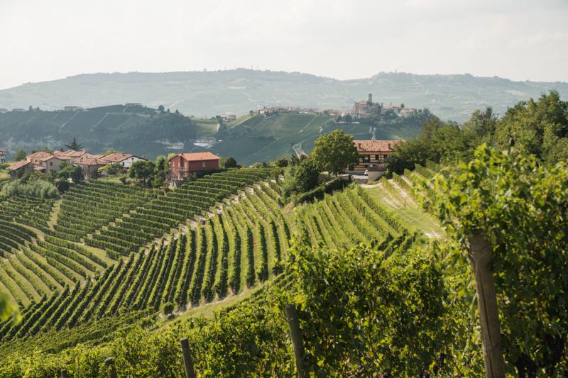 Winnice w Piemoncie