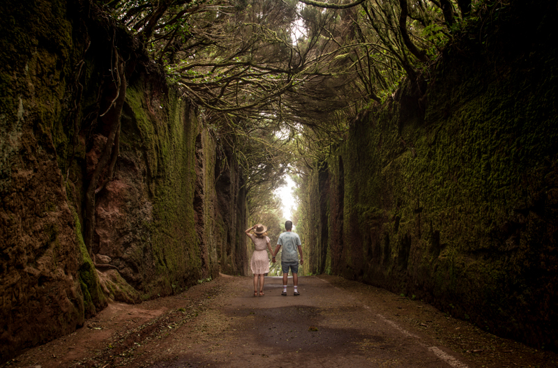 Teneryfa leśny tunel