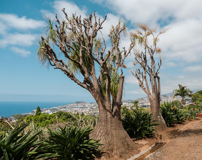 Funchal ogrody